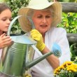 Young girl with her grandmother watering a plant — Stock Video