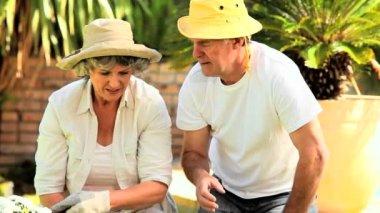 Retired couple potting plants — Stock Video
