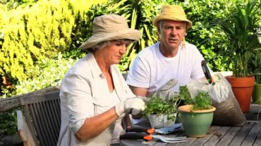 Mature couple potting herbs in the garden — Stock Video