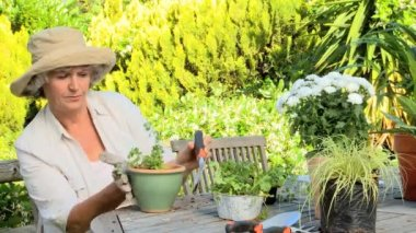 Woman re-potting plants in the garden — Stock Video