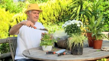 Mature man potting plants — Stock Video