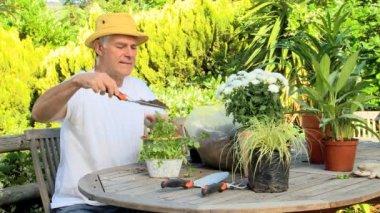 Mature man potting plants — Stock Video