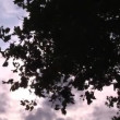 Autumn Sky — Stock Video #23640045