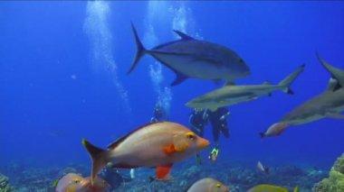 Shark Underwater Footage — Stock Video