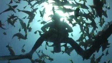 Underwater Stock Footage — Stock Video