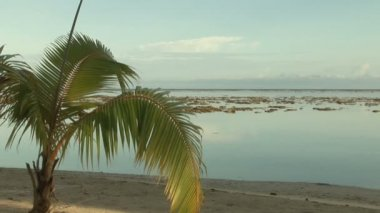 Stock Footage - Tropical Island — Stock Video