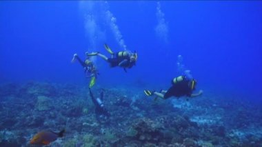 Under Water Stock Footage — Stock Video