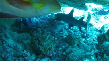 A Shark Underwater — Stock Video