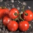 Water dropping on tomatoes in super slow motion — Stock Video