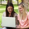 Two friends talking and laughing as they look use a laptop while sitting in a park — Stock Video