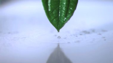 Regen op een blad in super slow motion — Stockvideo