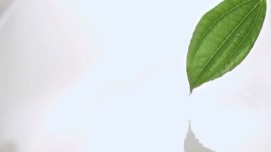 Droplet falling in super slow motion off leaf — Stock Video