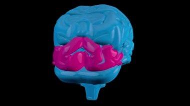 Giratorio cerebro azul con secciones resaltadas secuenciadas — Vídeo de Stock
