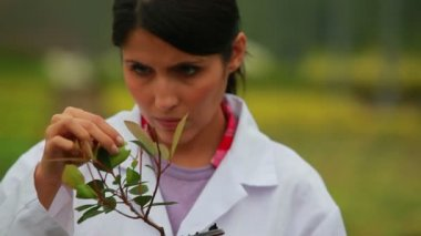 Woman inspecting plant — Video Stock