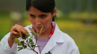 Woman inspecting plant — Vídeo de stock