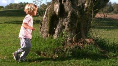 Child running around a large tree — Stock Video