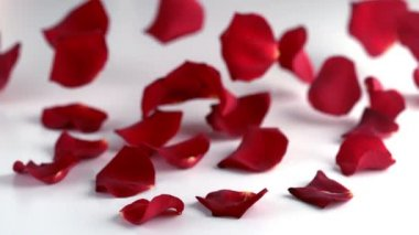 Red rose petals falling down — Stock Video