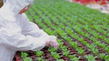 Forskare står växthuset arbetar — Stockvideo