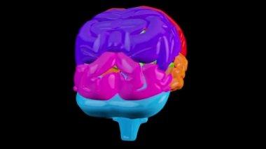 вращающийся мозга с выделенные разделы — Стоковое видео