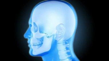 Rappresentazione di testa umana girevole con zoom sulla cefalea — Video Stock
