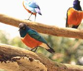 Colored bird — Stock Photo
