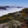 Shrubs and wild flowers, island of Tenerife and summit of the Teide — Stock Photo