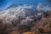 Dağı kış manzarası — Stok fotoğraf