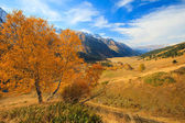 Lonely autumn tree in the mountains — Stock Photo