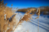 Dry grass in winter time — Stock Photo