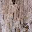 Foto de Stock  : Oak board