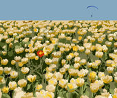 Red tulip and paraglider. — Stock vektor