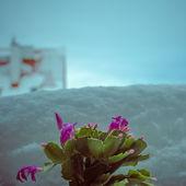 冬冬季. — ストック写真