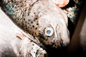 Trout. — Stock Photo