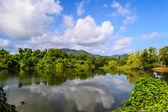 Natural pond — Stock Photo