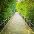 Stock Photo: Walk way among mangrove forest