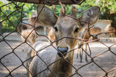Deer in the cage — Stock Photo