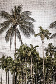Pozadí palma — Stock fotografie