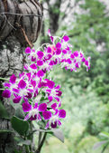Orchid on a tree — Stock Photo