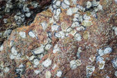Texture of sea animal on the rock — Stock Photo