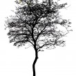 Stock Photo: Tree is isolated on white