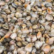 Pile of semussle — Stock Photo #40710495