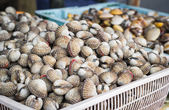 Ark shell and sea mussle in baskets — Stock Photo