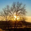 Bare tree in the sunset - Stock Photo