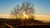 Bare tree in the sunset — Stock Photo