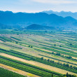 Stock Photo: Panoramic view of green valley with rich variety of crops with blue hills and sky in distance.