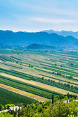 Panoramic view of the green valley with rich variety of crops with blue hills and sky in the distance. — Stock Photo