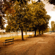 Warm autumn afternoon in park with trees — Stock Photo #32421299