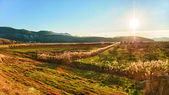 Sunset over the fertile valley in Dalmatia — Stock Photo
