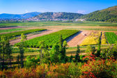 Cultivated fields in southern Croatia — Stock Photo