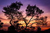 Silhouette of tree lit at sunset — Stok fotoğraf